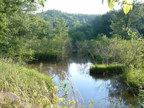 Stateline wetland 5 30 07 004 (2)